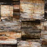 8331 Petrified Wood Cl